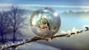 winter-1983443_1920